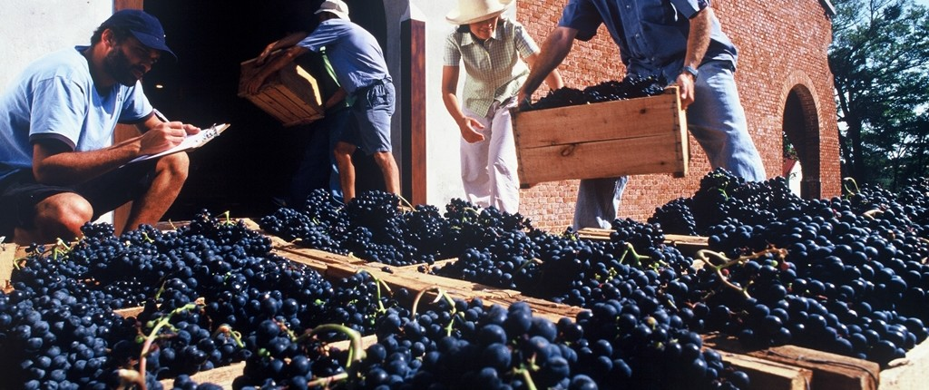 Wine and Culinary Tours in Uruguay